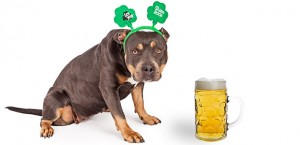 Dogs and Alcohol