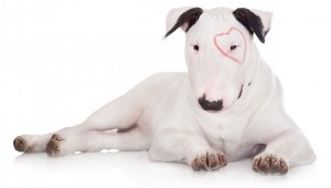 Eye Infections in Dogs