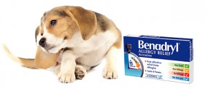 How to Use Antihistamines for Dogs