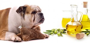Olive Oil for Dogs
