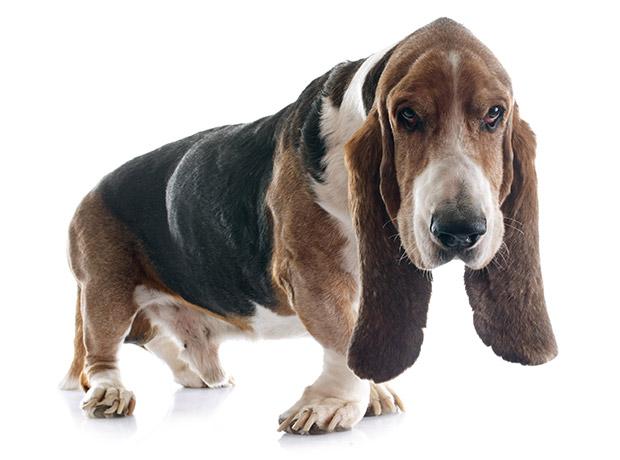 Save a Senior Dog's Life