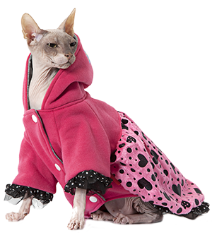Sphynx Cats and Grooming