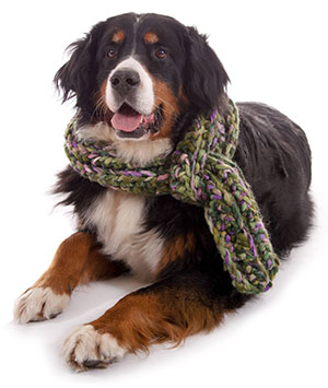 Symptoms of Kennel Cough in Dogs
