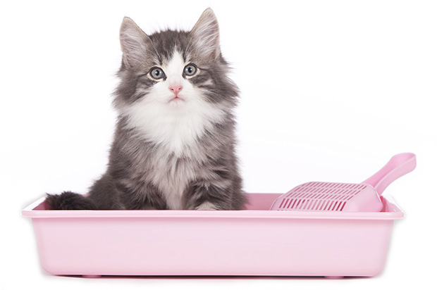 FIP in Cats - Symptoms Diagnosis and Treatment