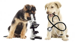 Giardia in Dogs - Symptoms and Treatment