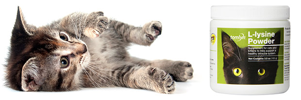 Lysine for Cats and Side Effects of Lysine