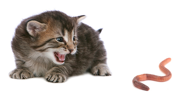 The Most Common Worms in Cats