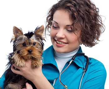 Treating Congestive Heart Failure in Dogs