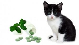 Antibiotics for Cats