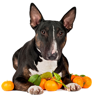 Citrus for Bladder Infection in Dogs