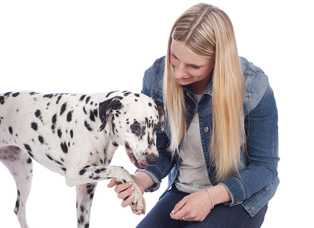 Dog Arthritis - Symptoms and Treatment