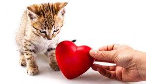 Heart Murmur in Cats