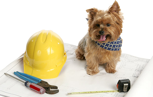 Top 10 Working Dog Breeds