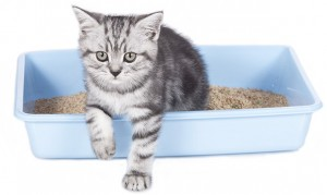 Cystitis in Cats - Causes Symptoms and Treatment