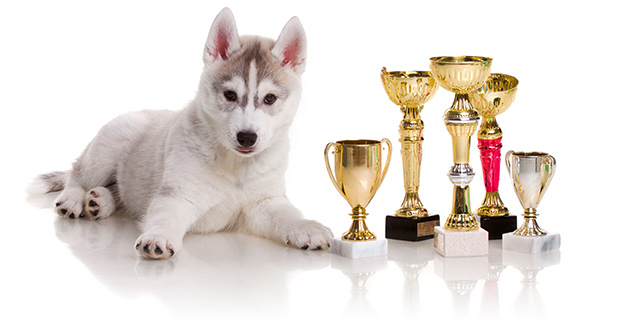 Annual Dog Show Events