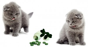 Antihistamines for Cats
