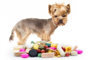 Dog Flu – Symptoms, Causes and Treatment