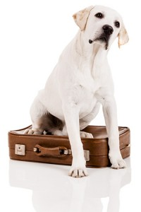 How to Find Dog-Friendly Hotels