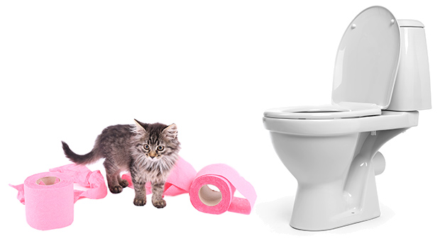 How to Train Your Cat to Use The Toilet