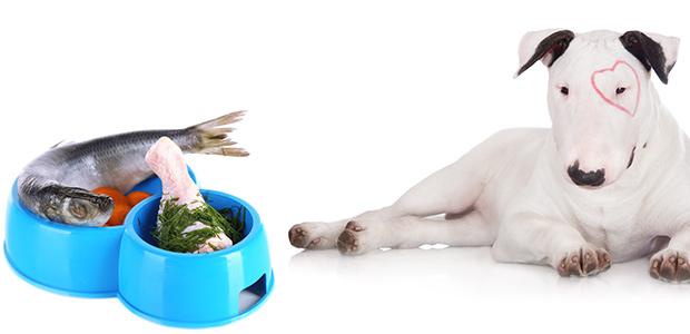 Natural Dog Food Brands