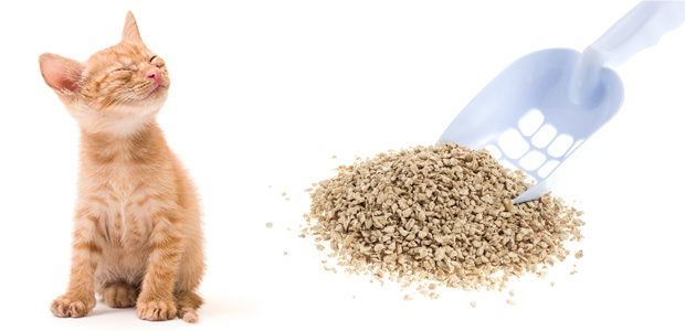 How To Find The Best Cat Litter