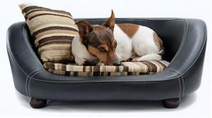 Indestructible Dog Beds