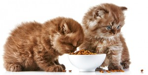 What Do Cats Eat?
