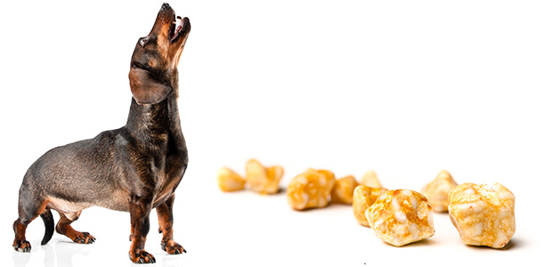 Bladder Stones in Dogs