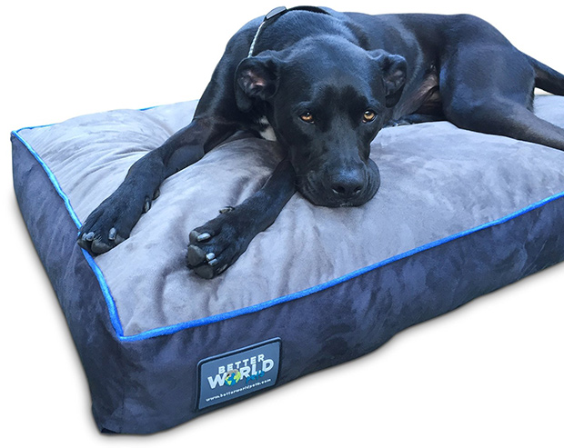 First Quality 6in Thick Orthopedic Dog Bed