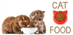 How to Find The Best Dry Cat Food