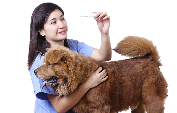 Causes and Symptoms of Mucus in Dog Stool