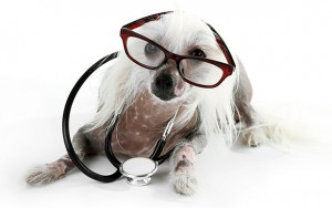 Staph Infection in Dogs