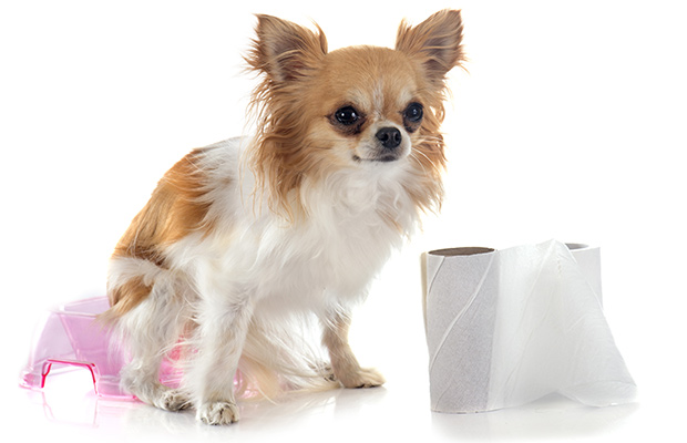 Symptoms of Whipworms in Dogs
