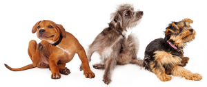 Dog Food Allergies – Symptoms and Treatment