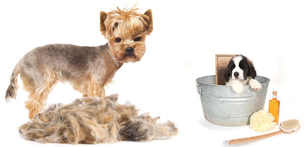 How to Treat Hair Loss in Dogs