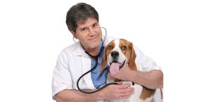 Common Veterinary Tests for Cats and Dogs